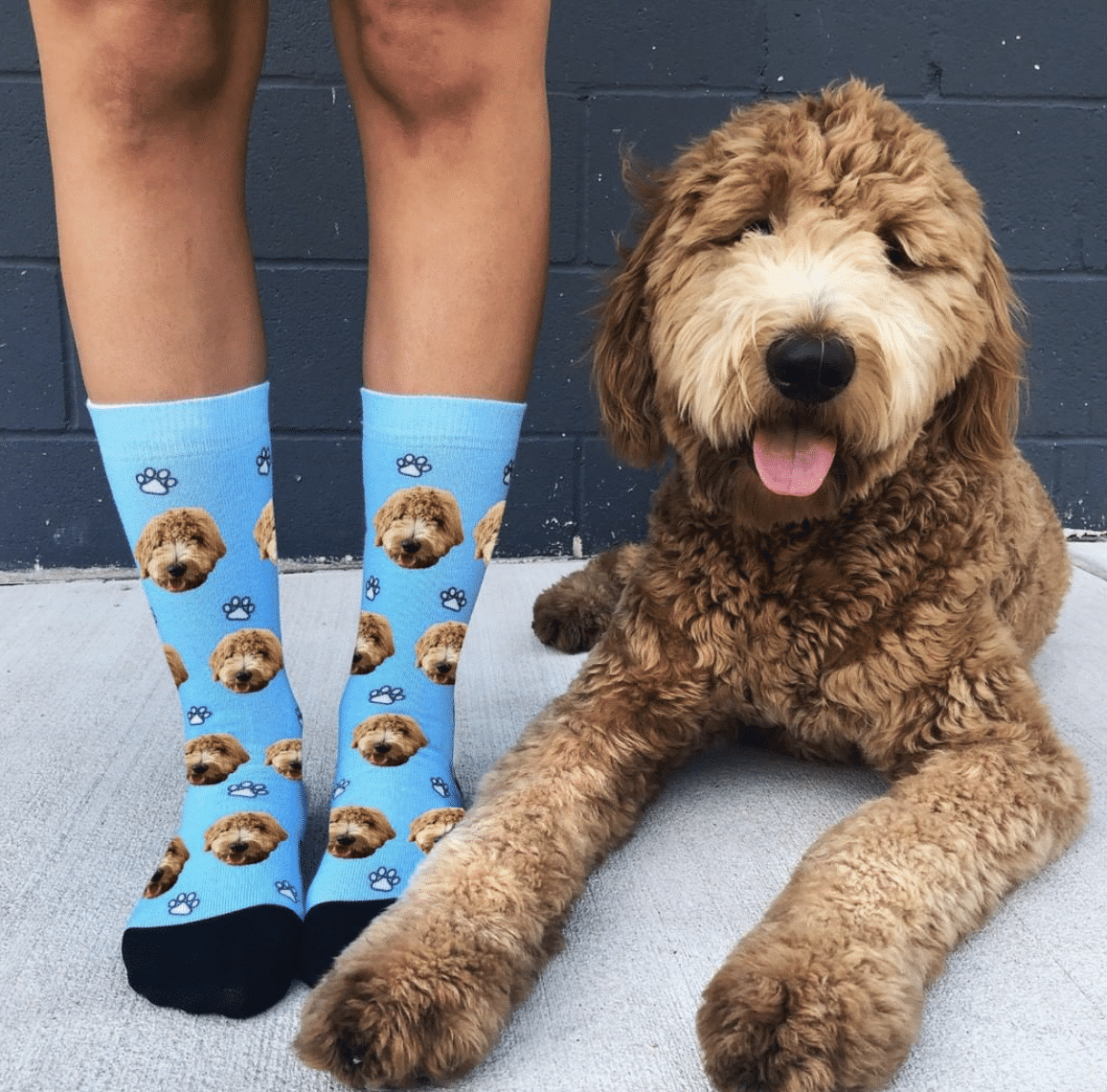 Goldendoodle - Standard Poodle