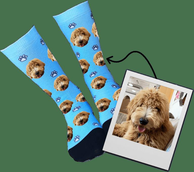Dog - Canidae