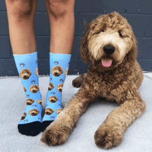 our office dog posing with our custom dog socks